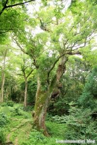 奈良豆比古(ならつひこ)神社(奈良市奈良坂町奥垣田)50