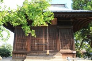 春日神社(川越市砂新田)11