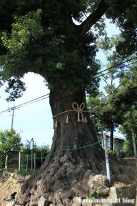 砂氷川神社(川越市砂)2