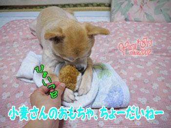 2016yuruiro_1030_k003_aaa