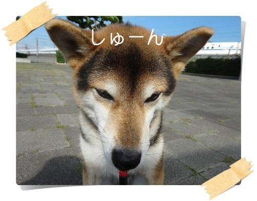 komaro20160913_2.jpg