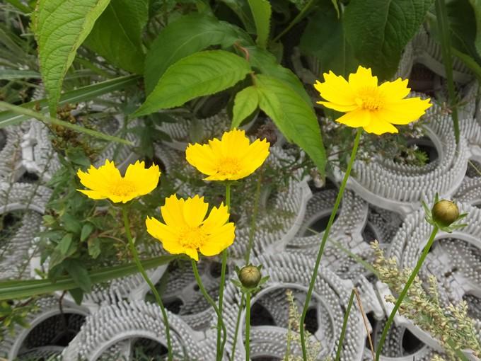 ゲレンデ滑降コースに咲く 花