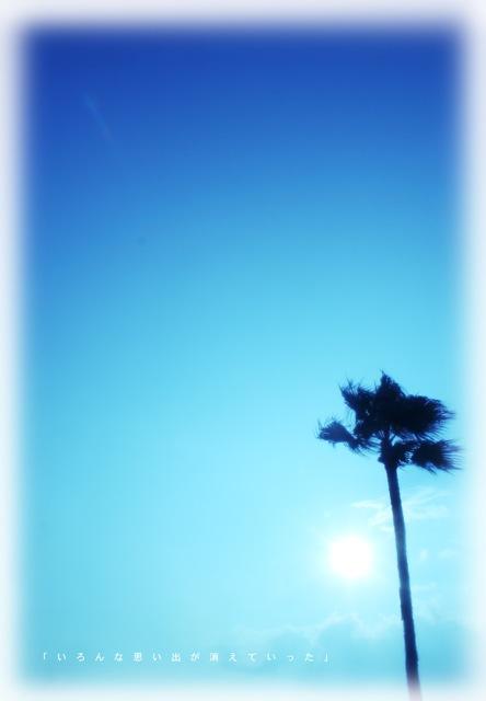 tree411