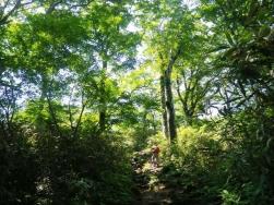 ブナの中の登山道