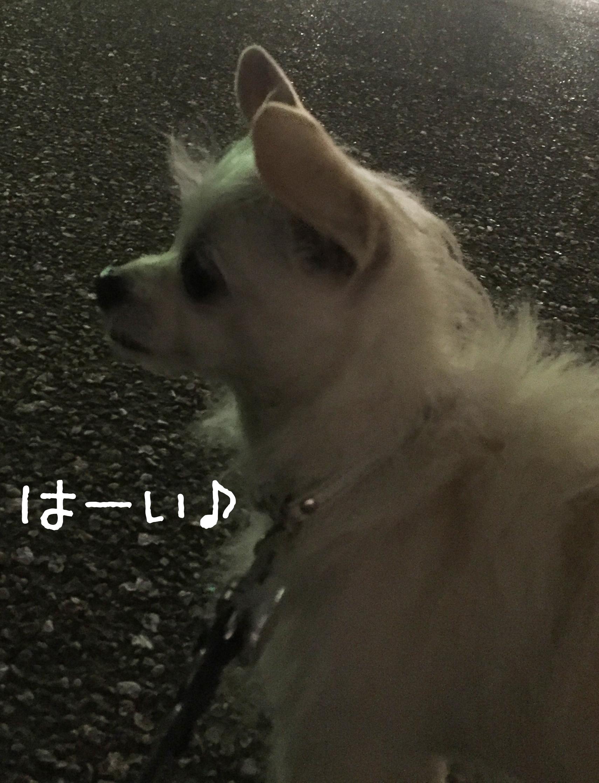 1609お散歩01