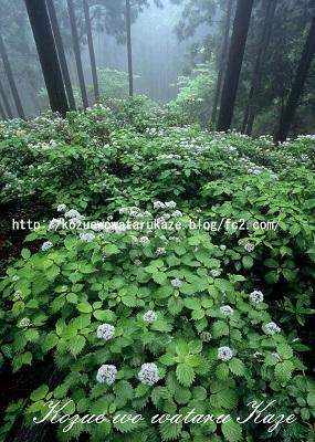 森のさんざめき