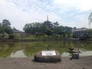 sarusawa0527_convert_20160527115144.jpg