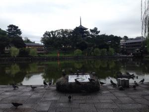 sarusawa0923_convert_20160923112045.jpg