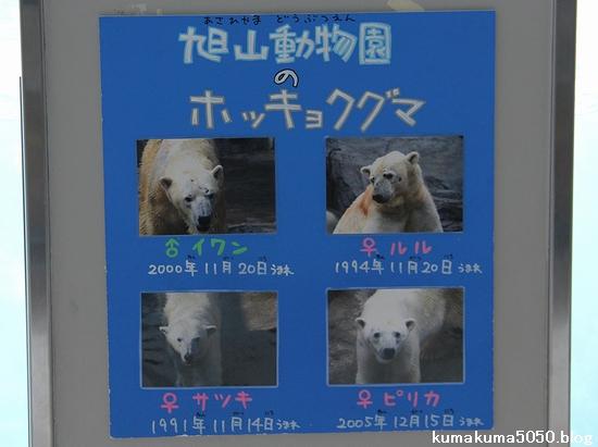 旭山動物園_15