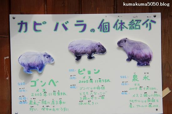 旭山動物園_33