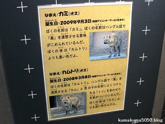 円山動物園_8