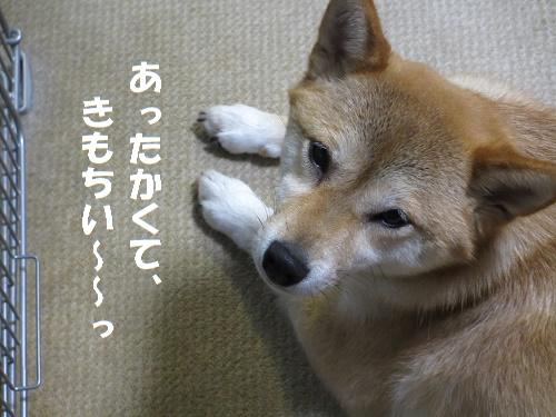 今朝のゆず 5/25