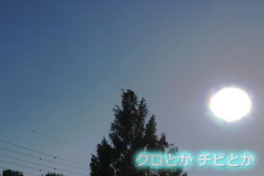540px20161104_etc-01.jpg