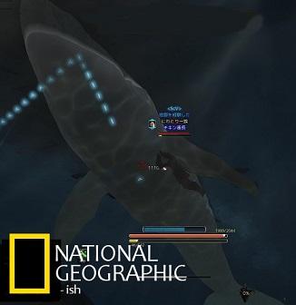 クジラは友達