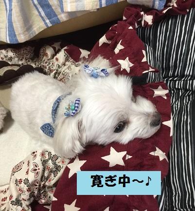 20160831寛ぎ