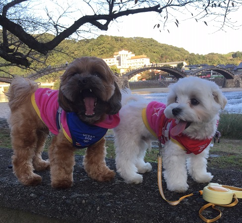 20161029 錦帯橋
