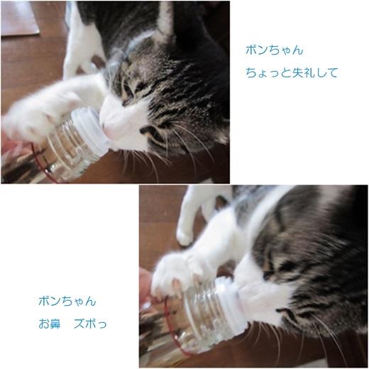 catsボンちゃん