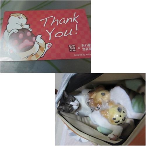 cats1_20160510204856c5c.jpg