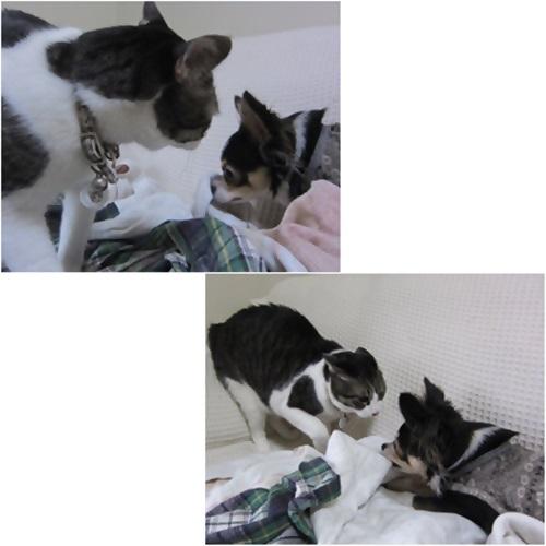 cats1_201605242003554e2.jpg