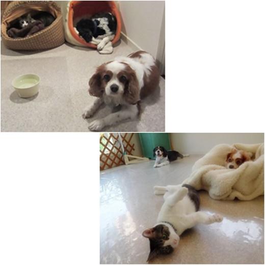 cats1_20160715195930119.jpg