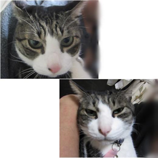 cats1_20160907140322478.jpg