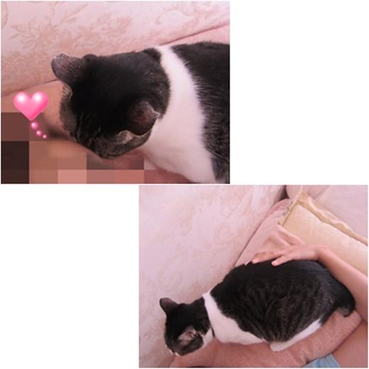 cats1_20160928180947f0b.jpg