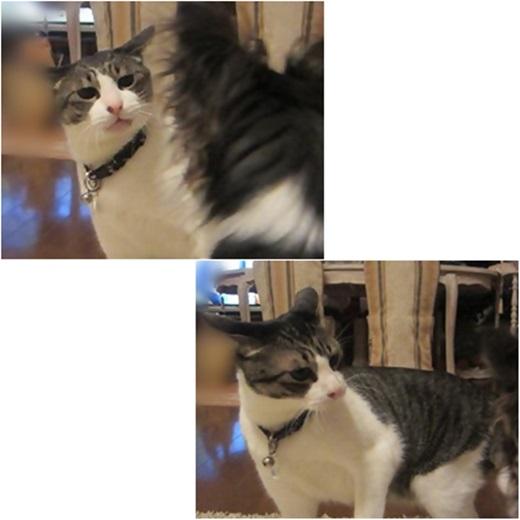 cats2_2016081713222503b.jpg