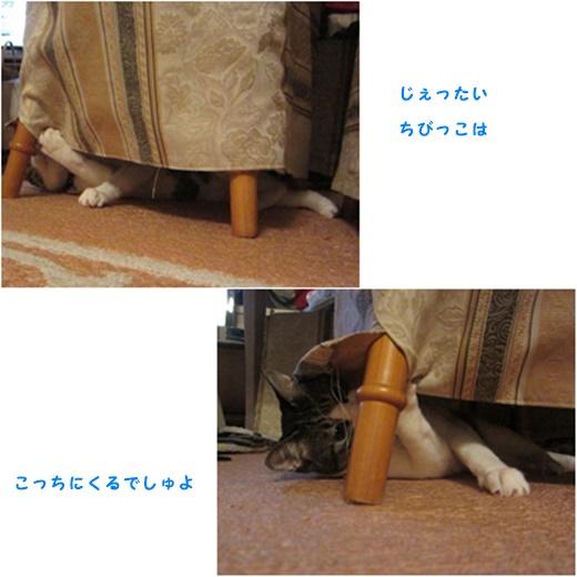 cats2_201609142048389a5.jpg
