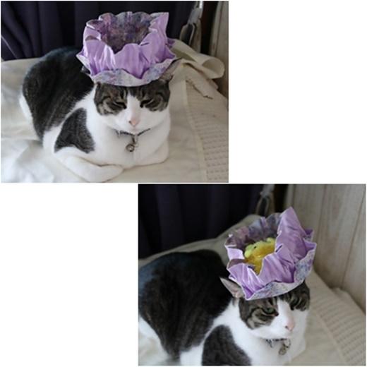 cats3_2016102819034896f.jpg