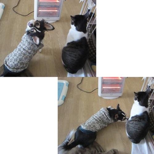 cats5_20160606133148ba7.jpg