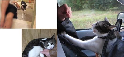 cats5_20160806165917ef5.jpg