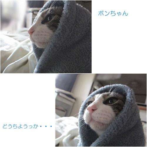 cats_20160414205611b32.jpg