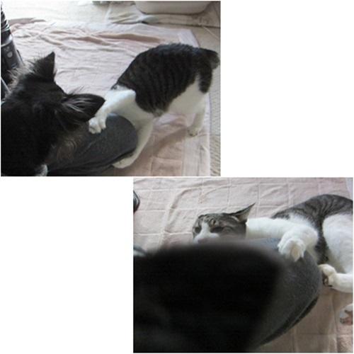 cats_2016041521165490a.jpg