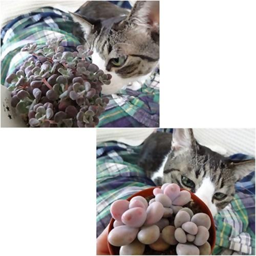 cats_20160416211858ede.jpg