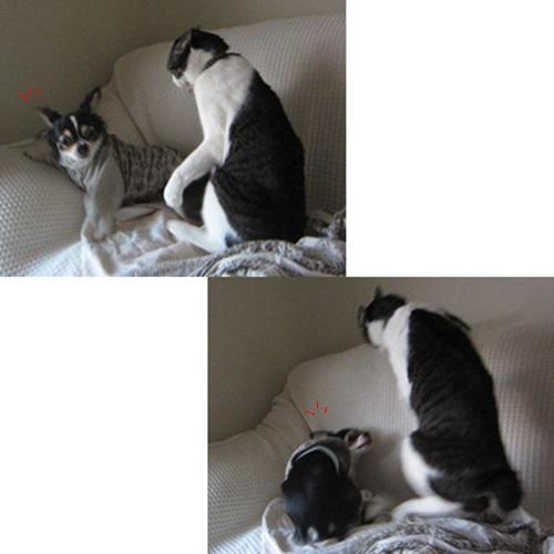 cats_20160430000210ab3.jpg