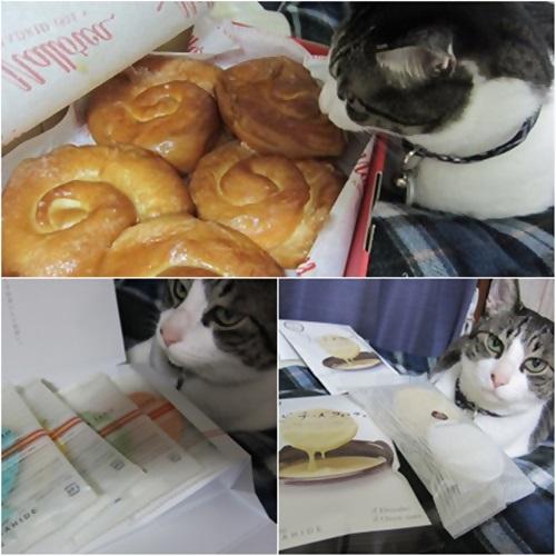 cats_20160524200353f3f.jpg