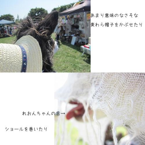 cats_20160531233556a69.jpg