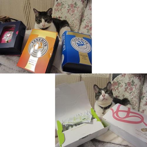 cats_20160606133053adb.jpg