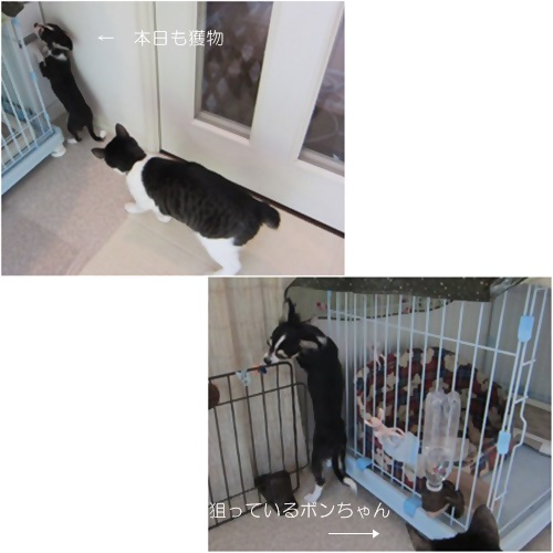 cats_20160611173843c84.jpg