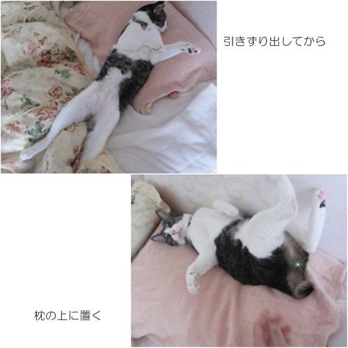 cats_2016061817184009c.jpg