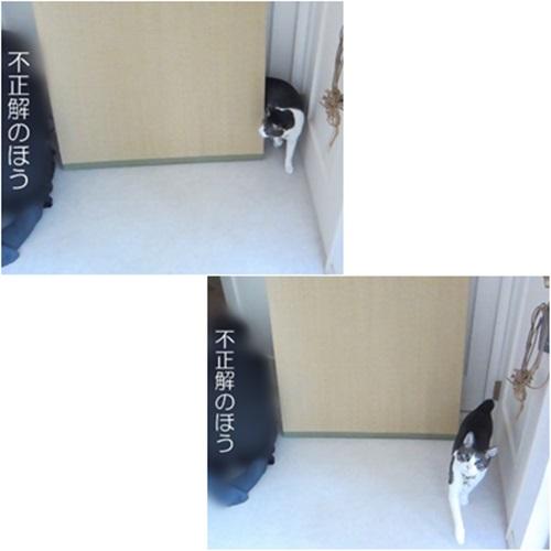cats_201606252012181a1.jpg