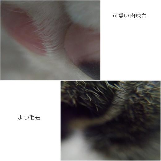 cats_20160709183018b70.jpg