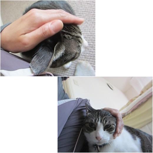cats_201608081818081b0.jpg