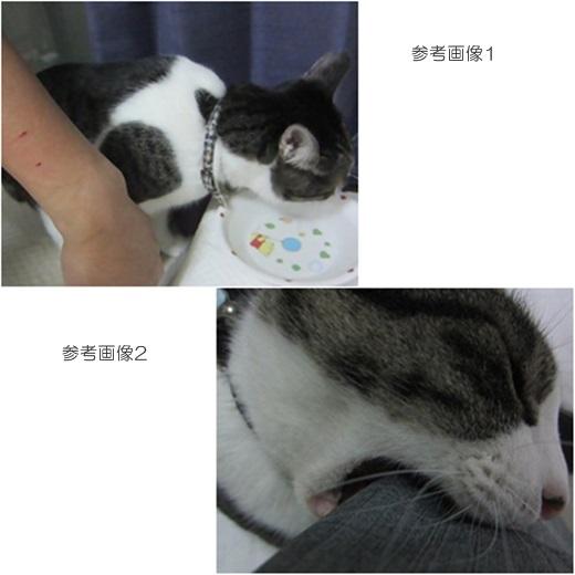 cats_20160817132224281.jpg