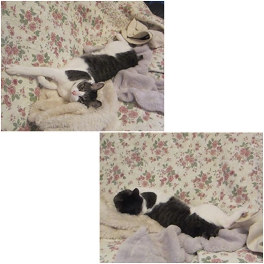 cats_201609201943462e0.jpg