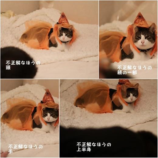cats_20161031232831557.jpg