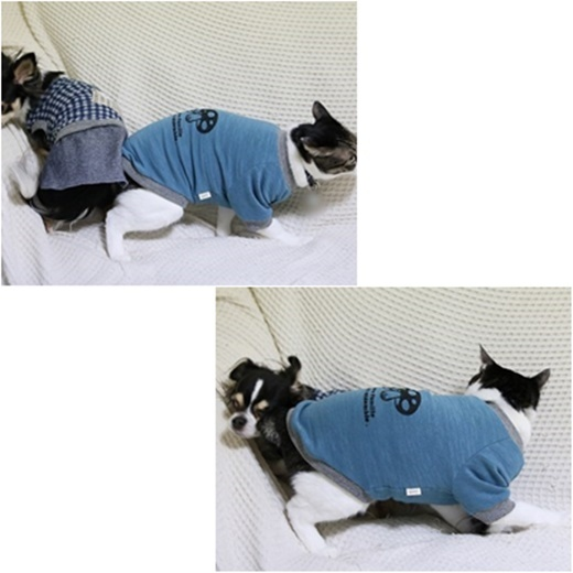 cats_20161104211932f86.jpg