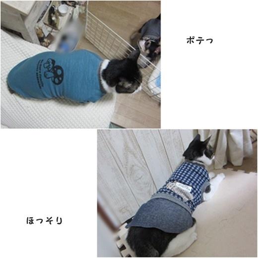 cats_20161104215207d1b.jpg