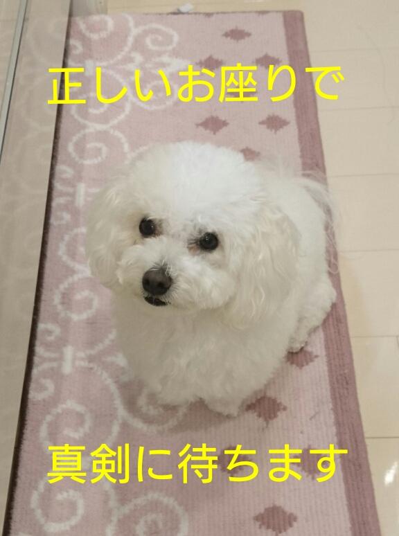 20161027005858d51.jpg
