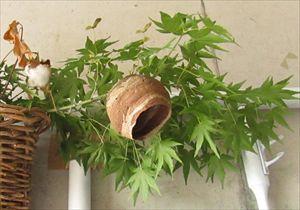ハチの巣 (3)_R